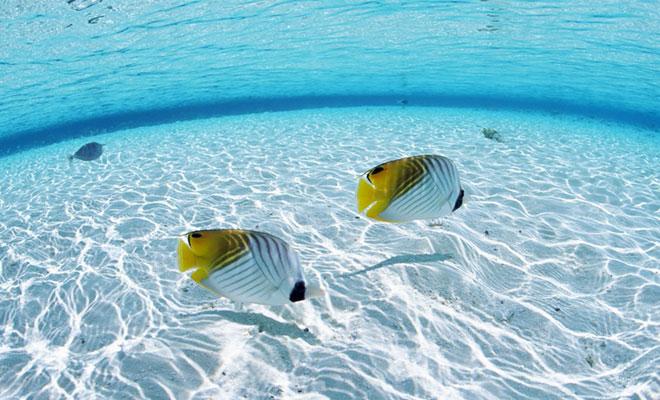 Dia mundial de los océanos.
