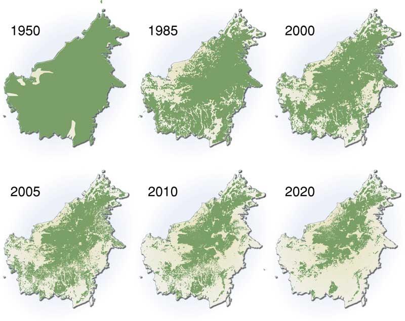 Borneo aceite de palma deforestación